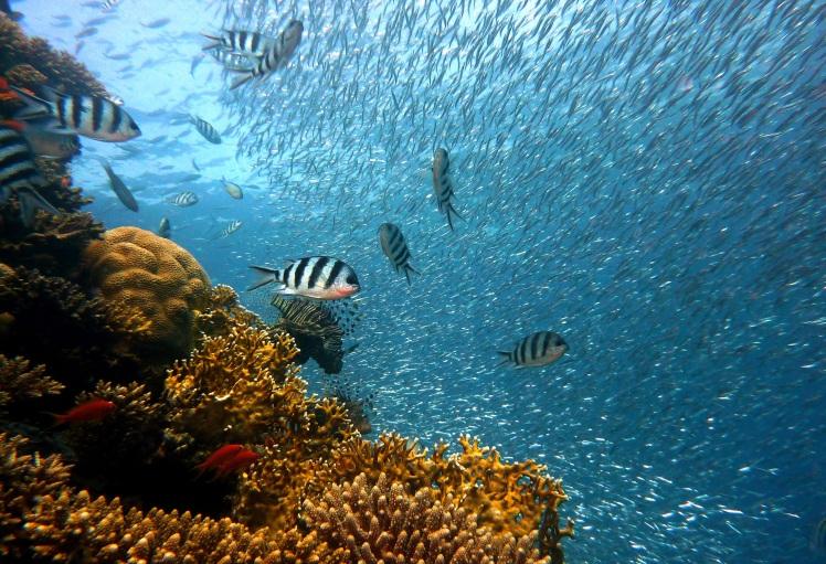 fish-378286.jpg
