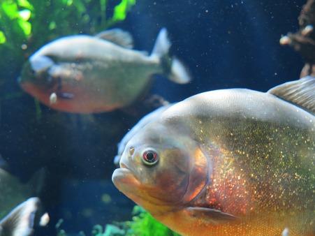 aquarium-1175051_1920.jpg