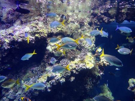 fish-278570_1920.jpg