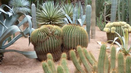 cactus-1685048_1920