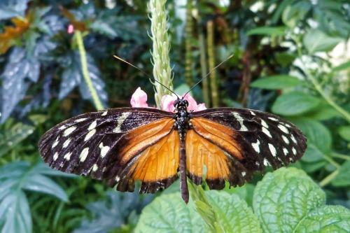 butterfly-1405148_1920