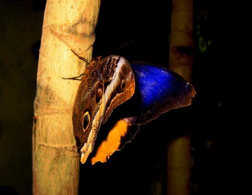 butterfly-2183692_1920