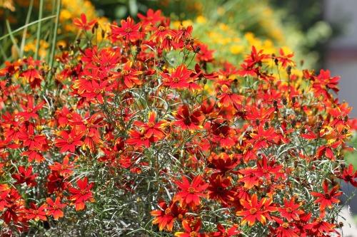 flowers-2513958_1920