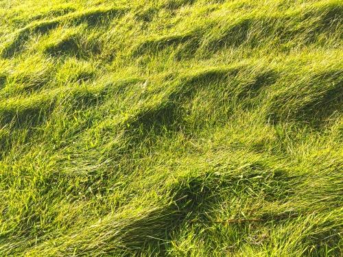 grasses-2704858_1920.jpg